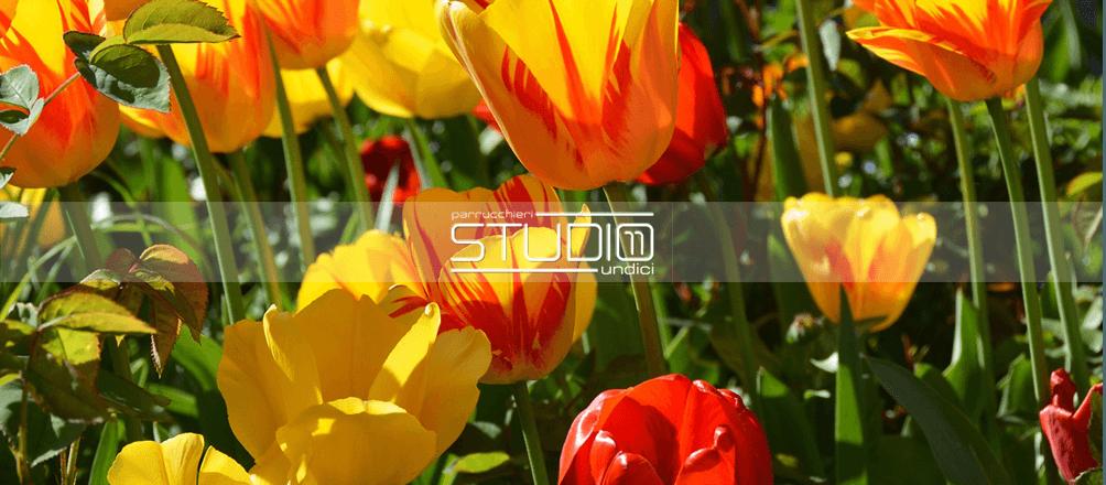 tulips-1261141_1920.fw